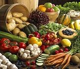 Zelenina sterilovaná
